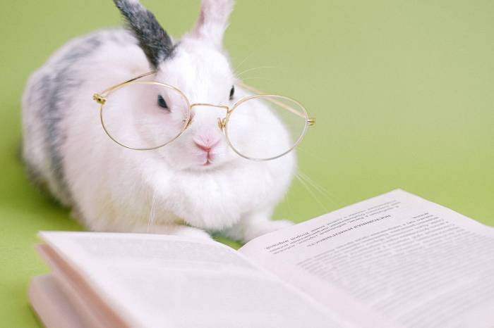 cute rabbit with eyeglasses